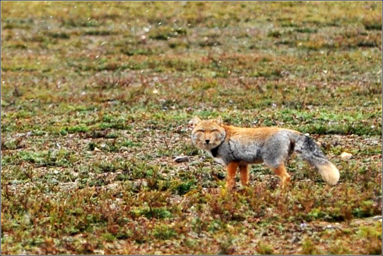 沿途可以看见很多野生动物