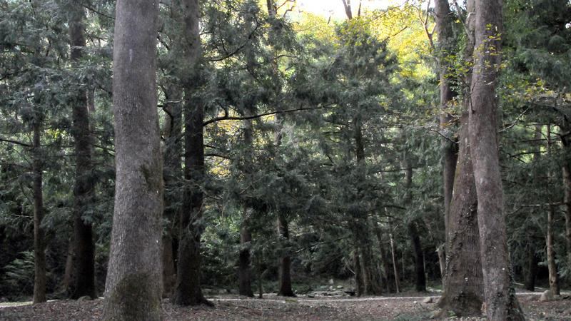 树木自然奇观拥抱的图片