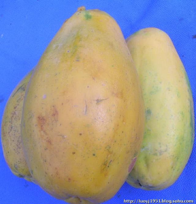 百益果王番木瓜