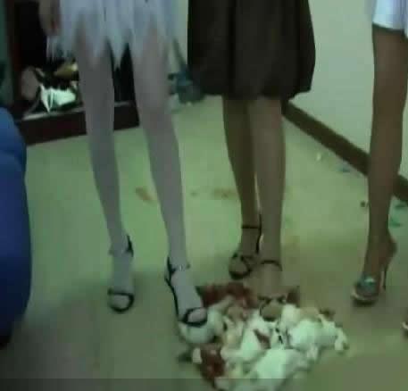 踩兔女_虐杀小兔子变态女,不如上海大火守望狗-tuoniao2323-搜狐博客