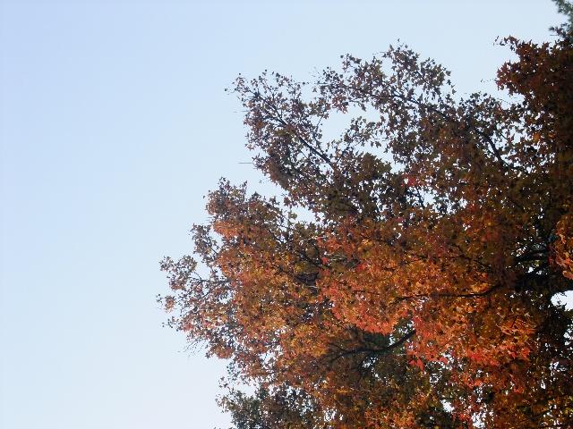 手指印画秋天的树