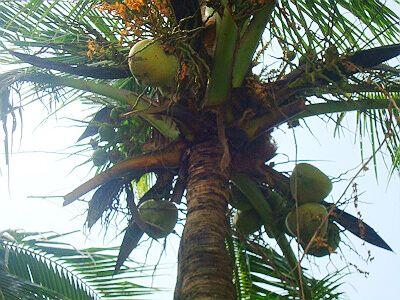 椰子树流水风景图