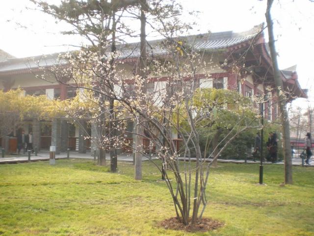 西安大雁塔北广场2010年12月11