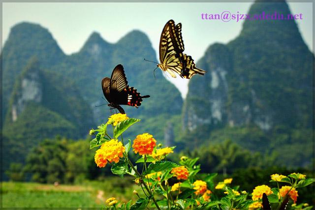 蝴蝶的风景图片