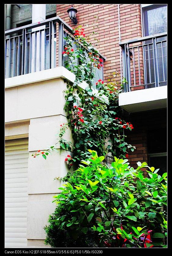 关于圣莫丽斯一公一母木棉树的浪漫故事