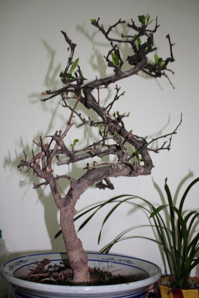 枯树发新芽