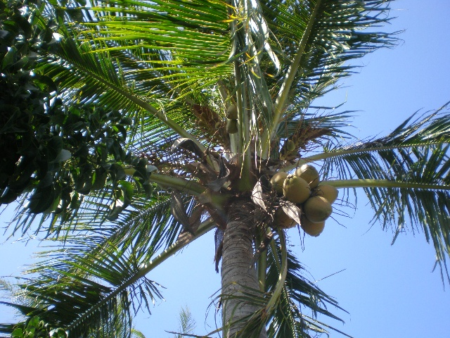 台湾之旅(十九)———槟榔树,椰子树