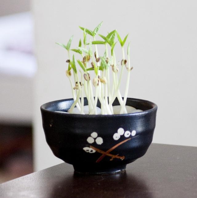 绿豆泡水发芽了还能吃吗?