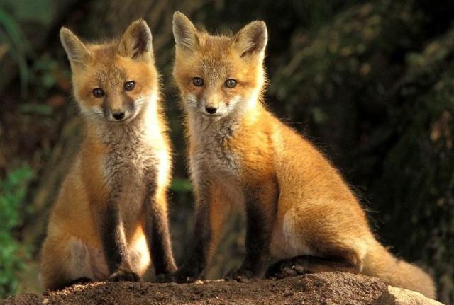 野外的动物们都在忙碌着找食物